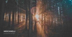 bosco dove viene prelevato il legno per il parquet
