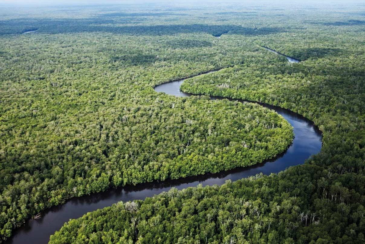 foreste-teak